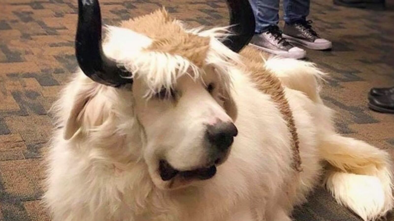 Dog Dresses As Appa In Adorable Avatar The Last Airbender Cosplay Cosplay Central