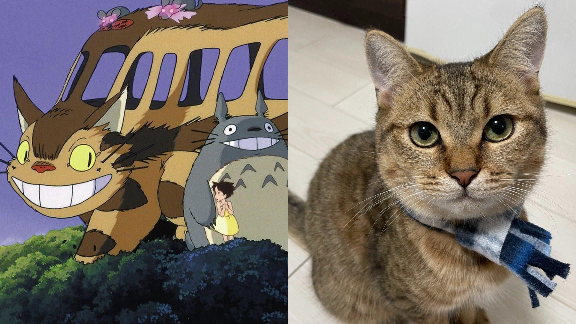 Studio Ghibli Catbus